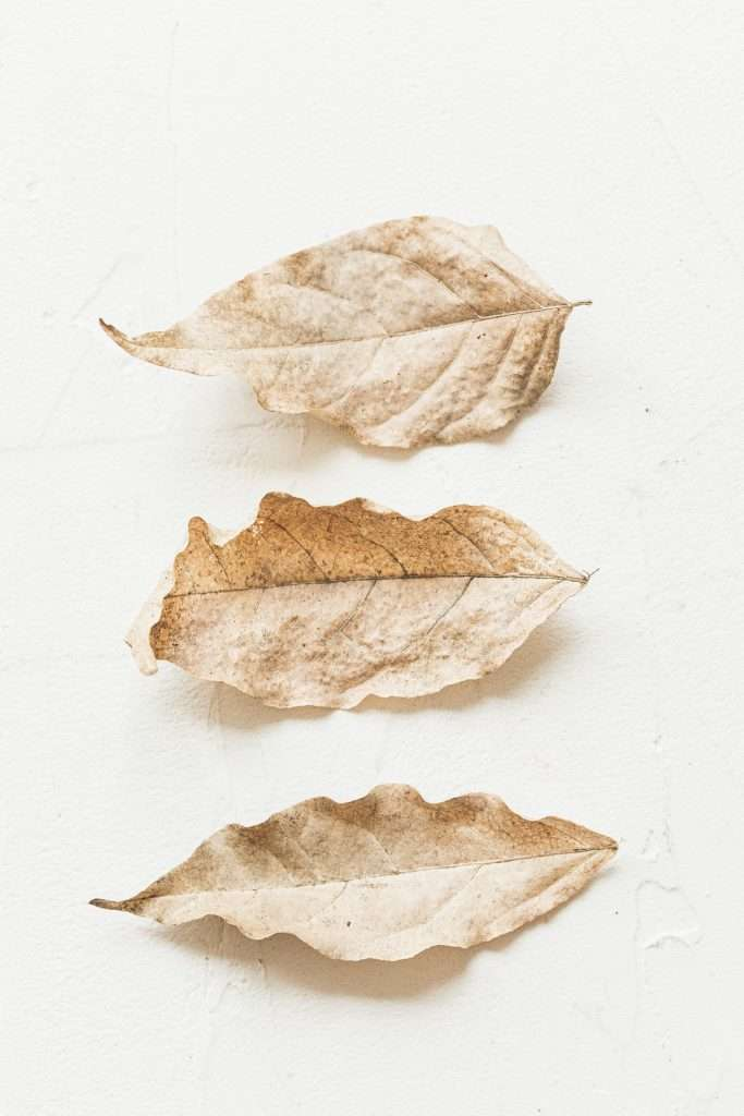 three fall leaves stacked horizontally on a white background
